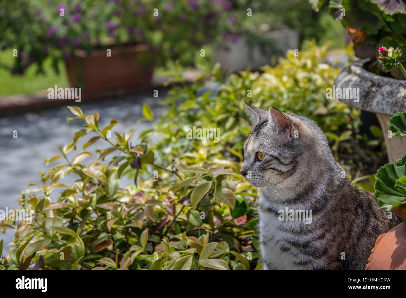 Cat watching from a high place Stock Photo