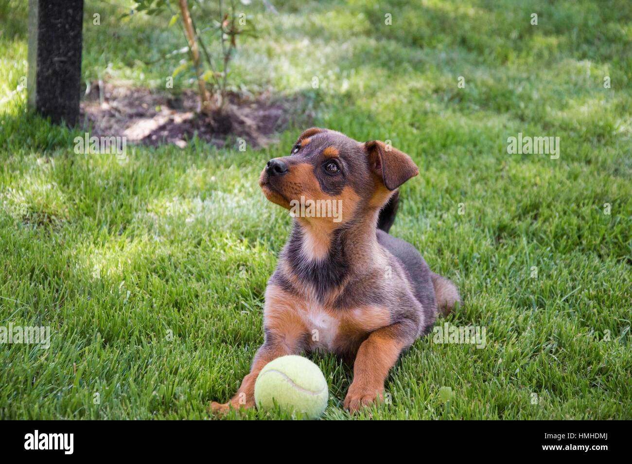 Cute puppy waiting to play Stock Photo