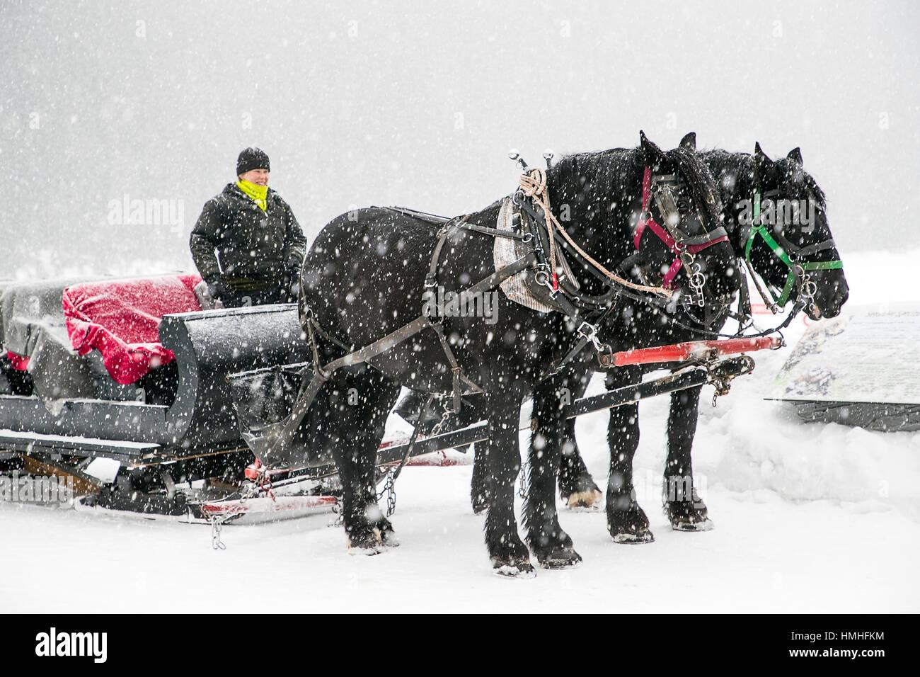 Tourists on horse drawn sleigh ride; The Fairmont Lake Louise; Lake Louise; Banff National Park; British Columbia; - Stock Image