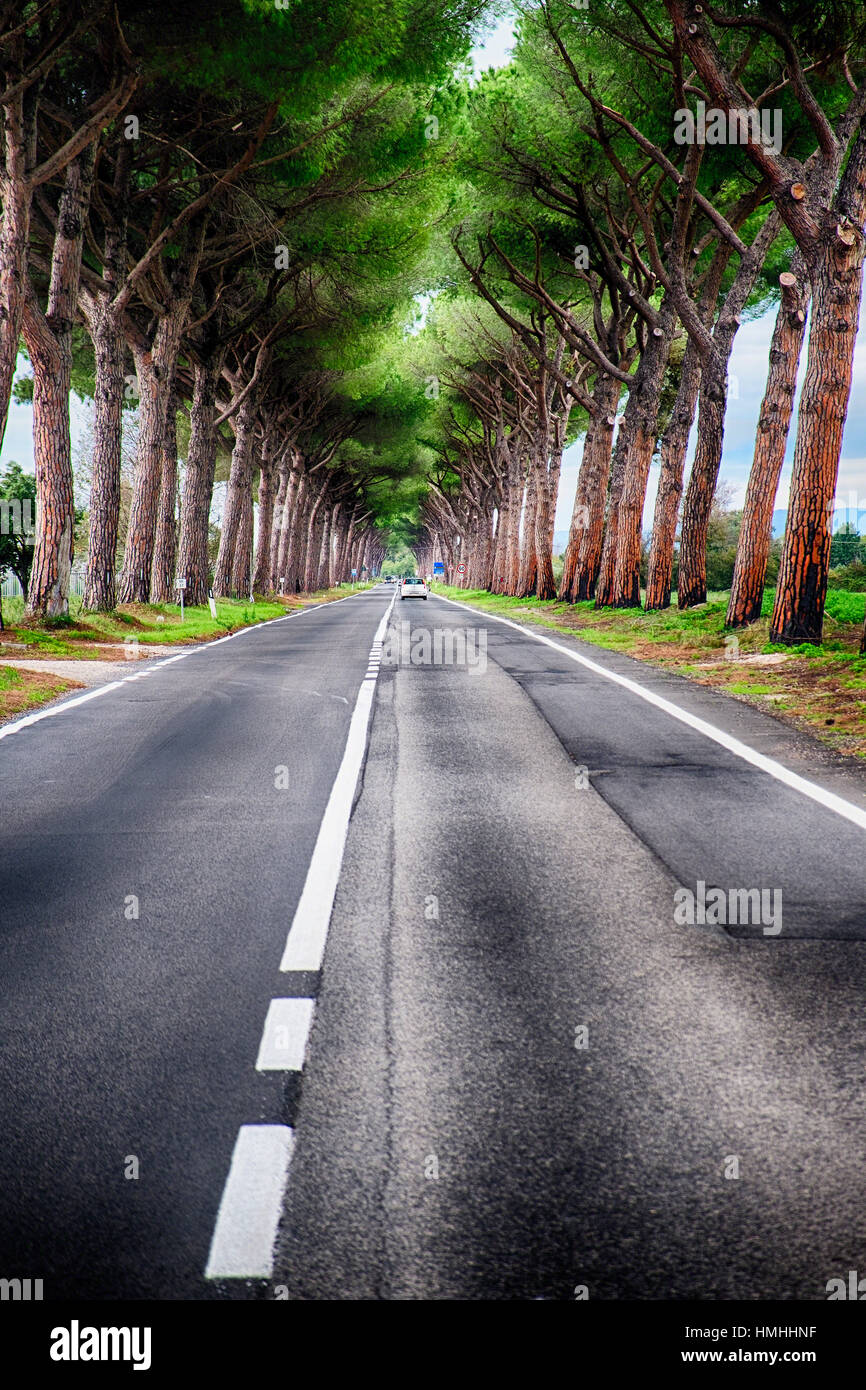 Country Road with Stone Pine Tree Tunnel, Lazio, Italy - Stock Image