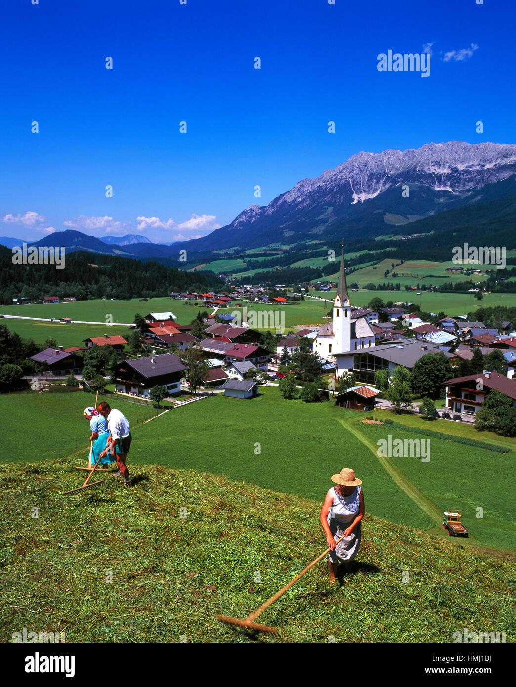 Harvesting in Ellmau village, Tirol, Austria - Stock Image