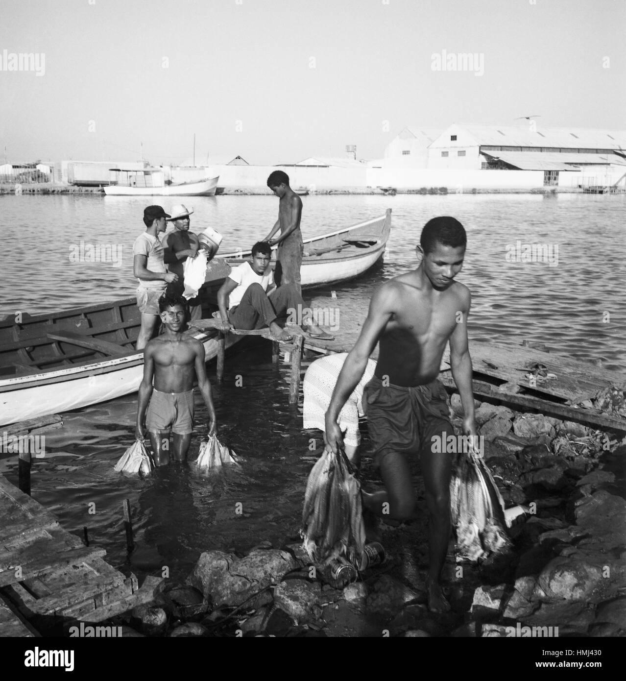 Jungen tragen Fische aus dem Rio Manzanares in Cumaná ans Ufer, Venezuela 1966. Boys carry fish out of the Rio Manzanares Stock Photo