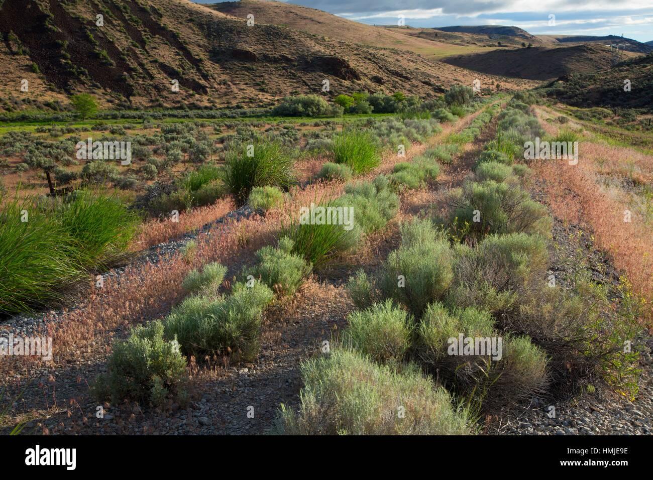 Rail grade, Riverside Wildlife Area, Oregon. - Stock Image