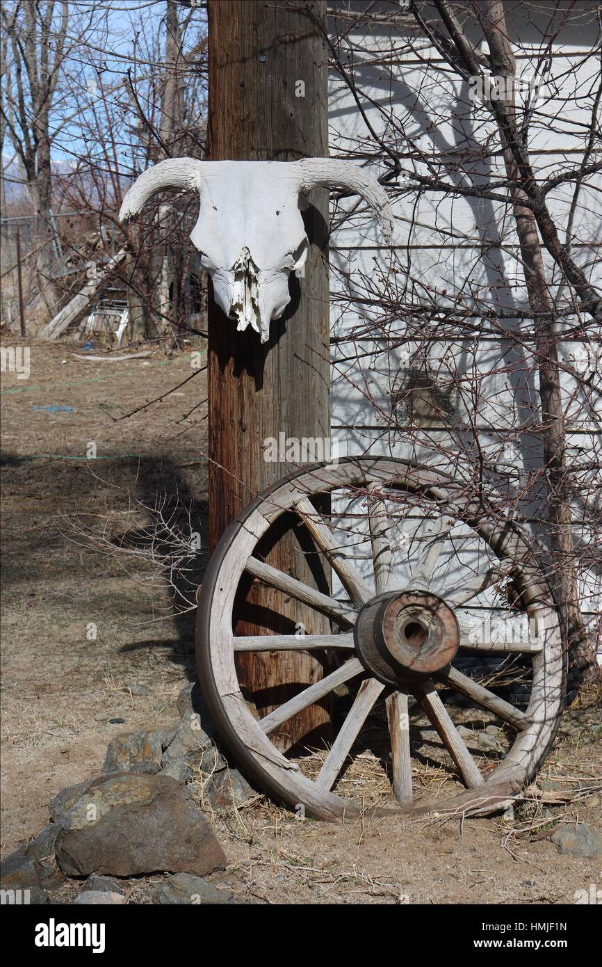 An Old Cow Skull And An Old Wagon Wheel Decorate The Yard Of An Old Stock Photo Alamy