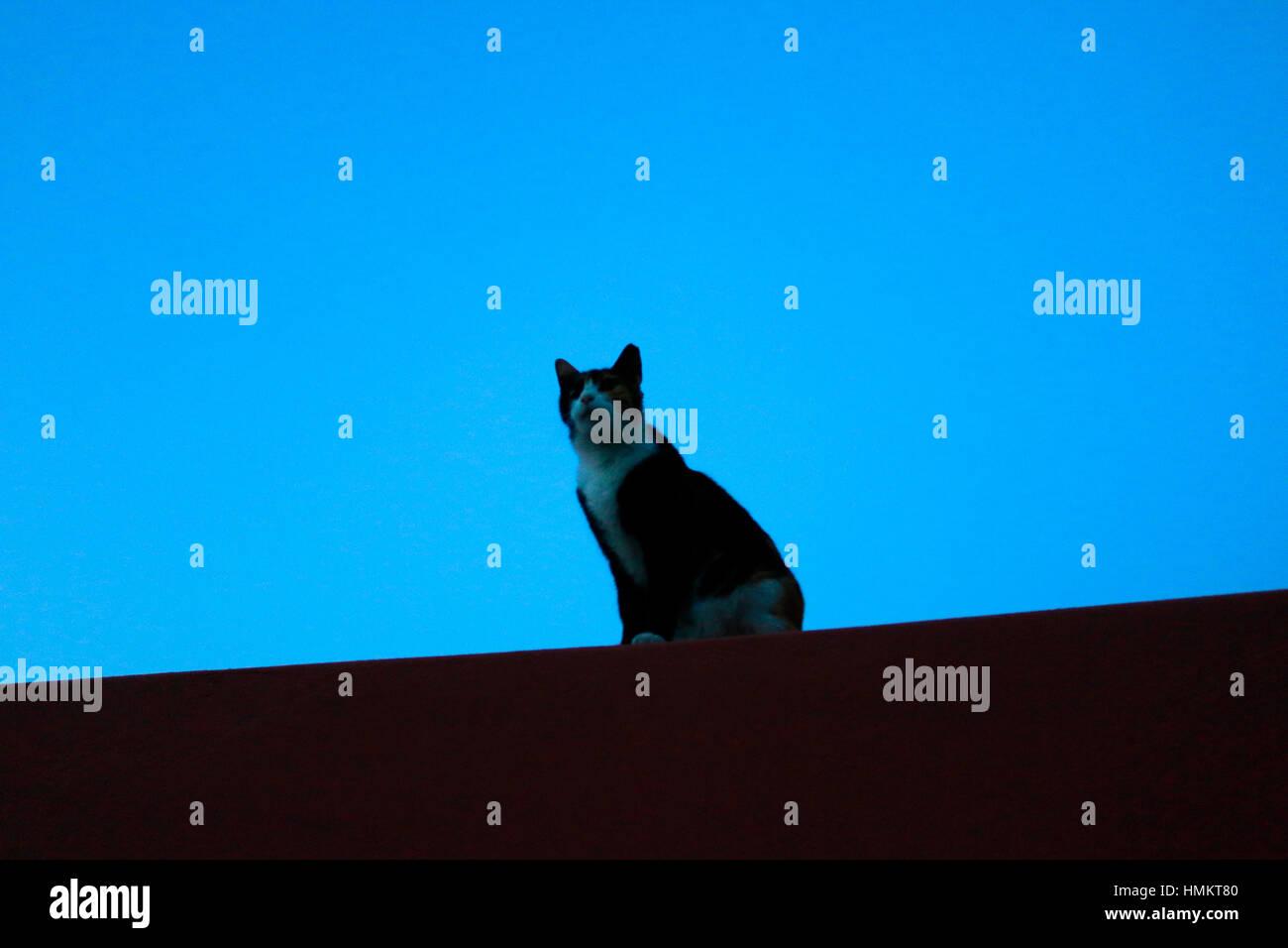Katze, Athen, Griechenland. Stock Photo