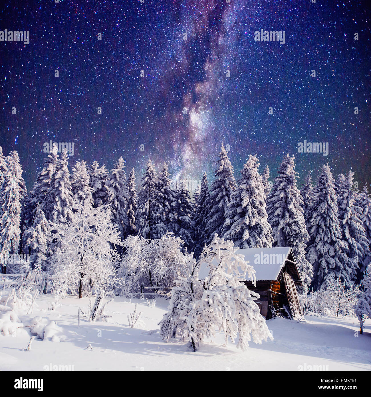 Starry sky and a tree in frost at the beautiful - Stock Image