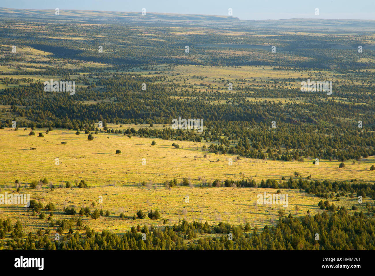 Juniper grassland, Steens Mountain Cooperative Management and Protection Area, Steens Mountain Backcountry Byway, - Stock Image
