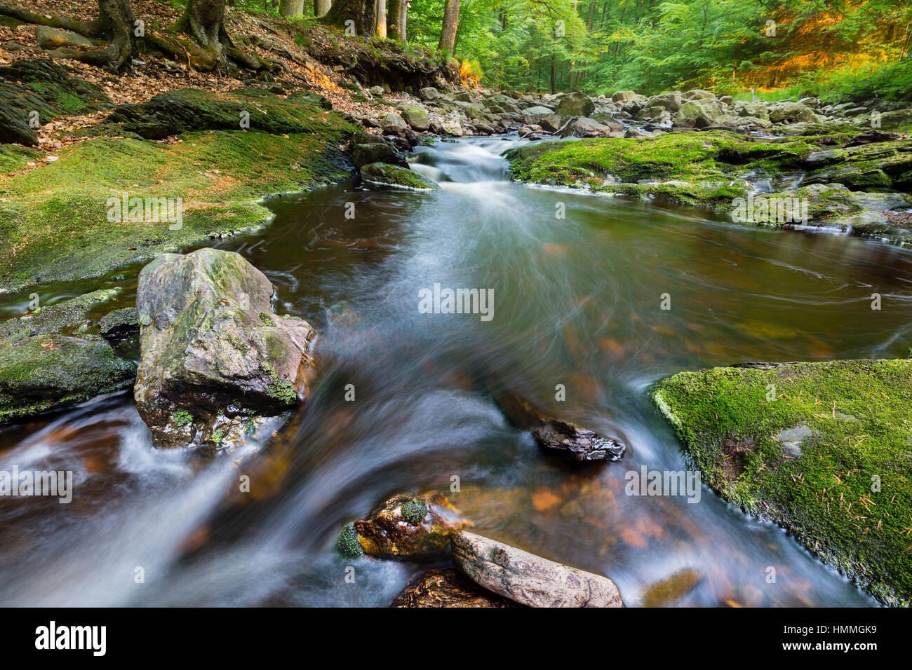 Low angle view of a rapids in a small mountain stream in the High Fens, Ardennes, Belgium running between green Stock Photo