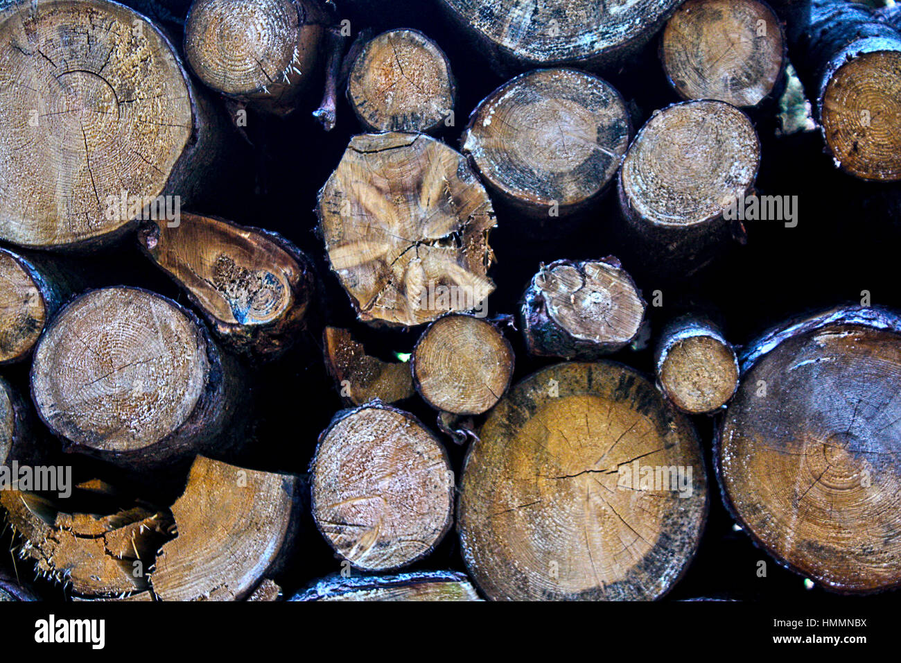Lots of Logs - Stock Image