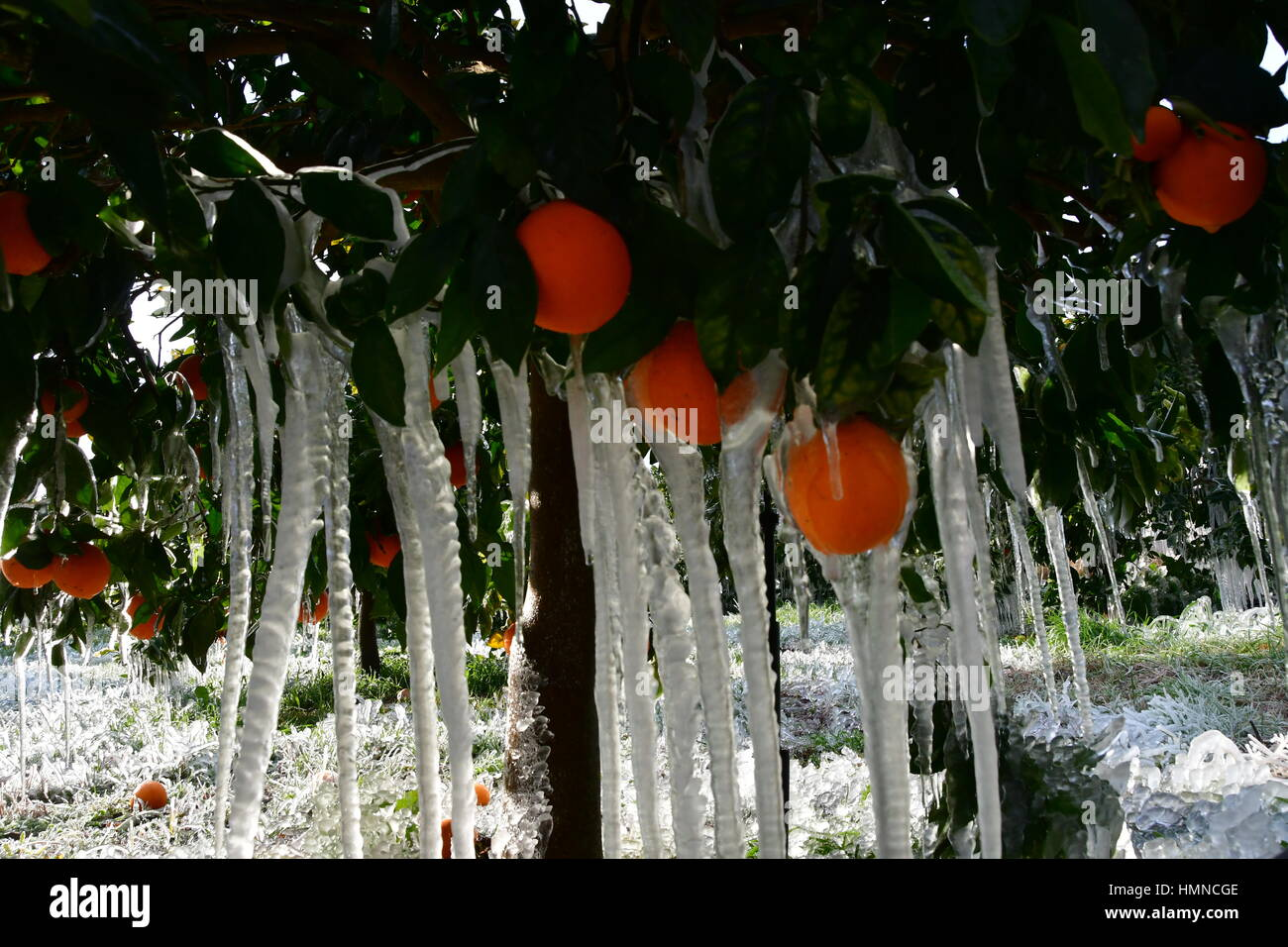Greece everything froze in the city area of Argos Argolis, Southwestern Peloponnese, the temperature reached at - Stock Image