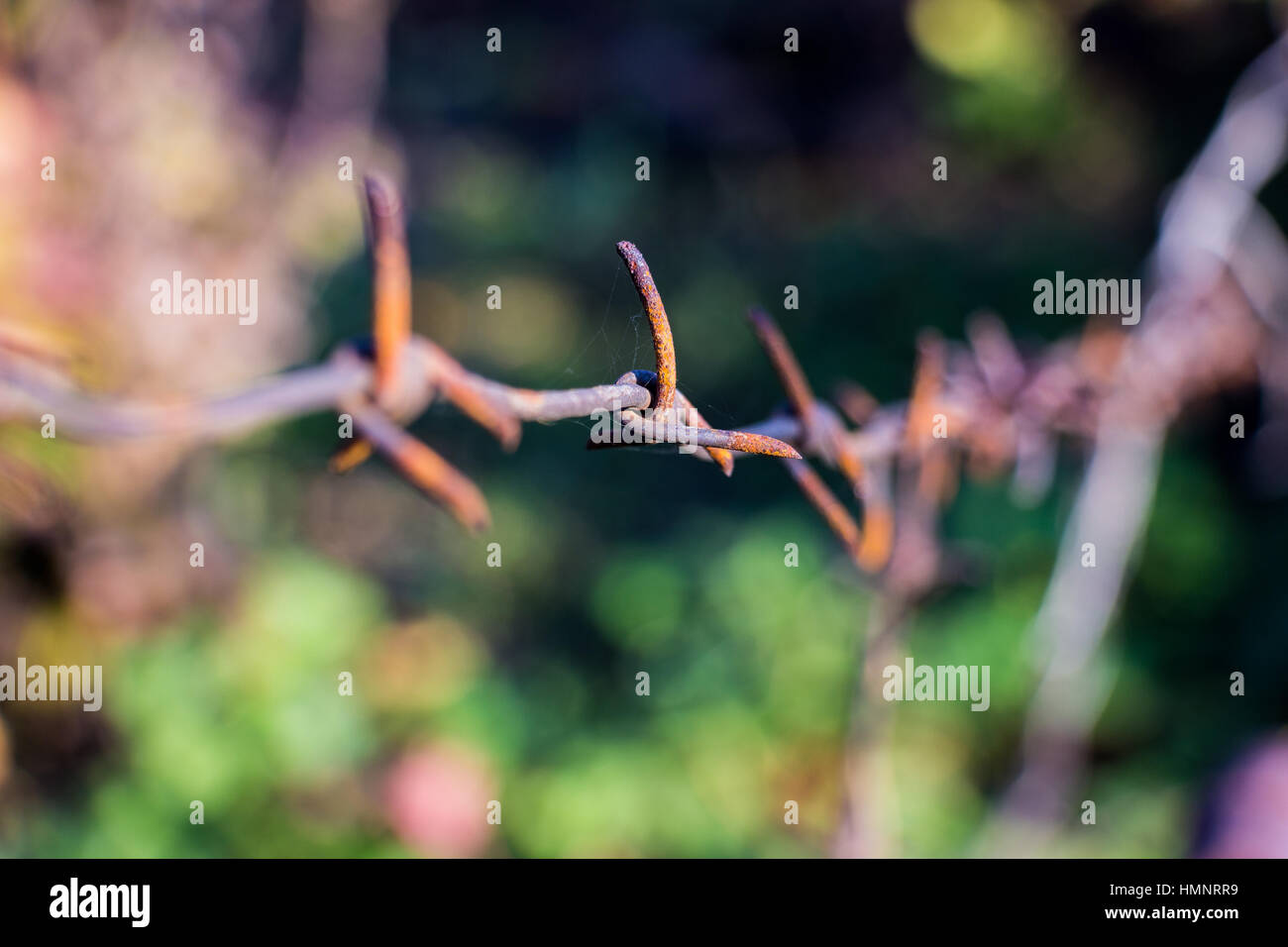 Barbed wire closeup on blurred background 2 - Stock Image