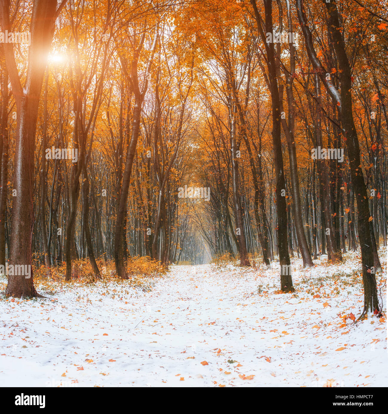 October mountain beech forest - Stock Image