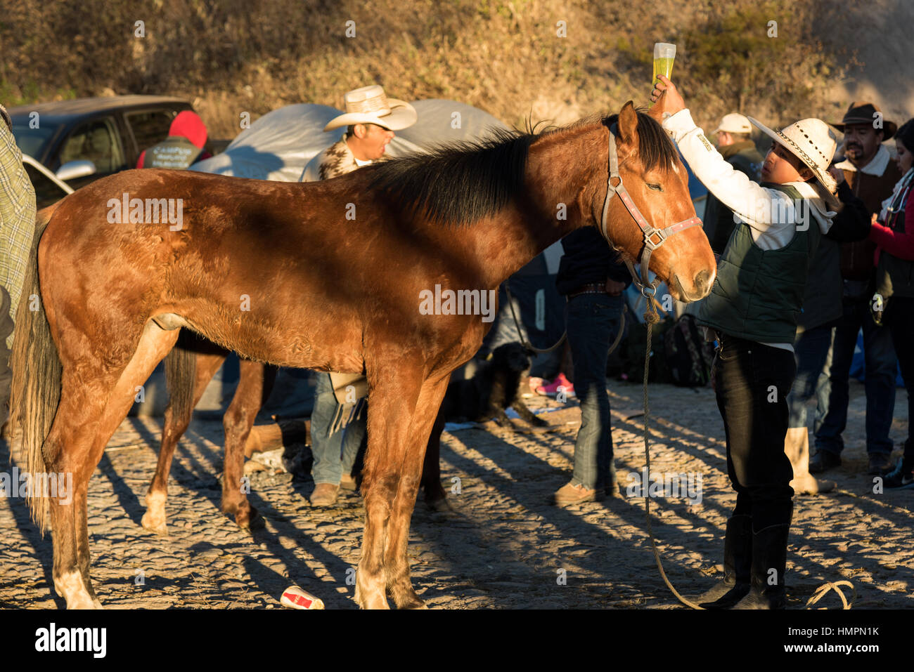 Student veterinarians staff an emergency clinic for horses injured in the three-day ride to Cubilete Mountain at - Stock Image