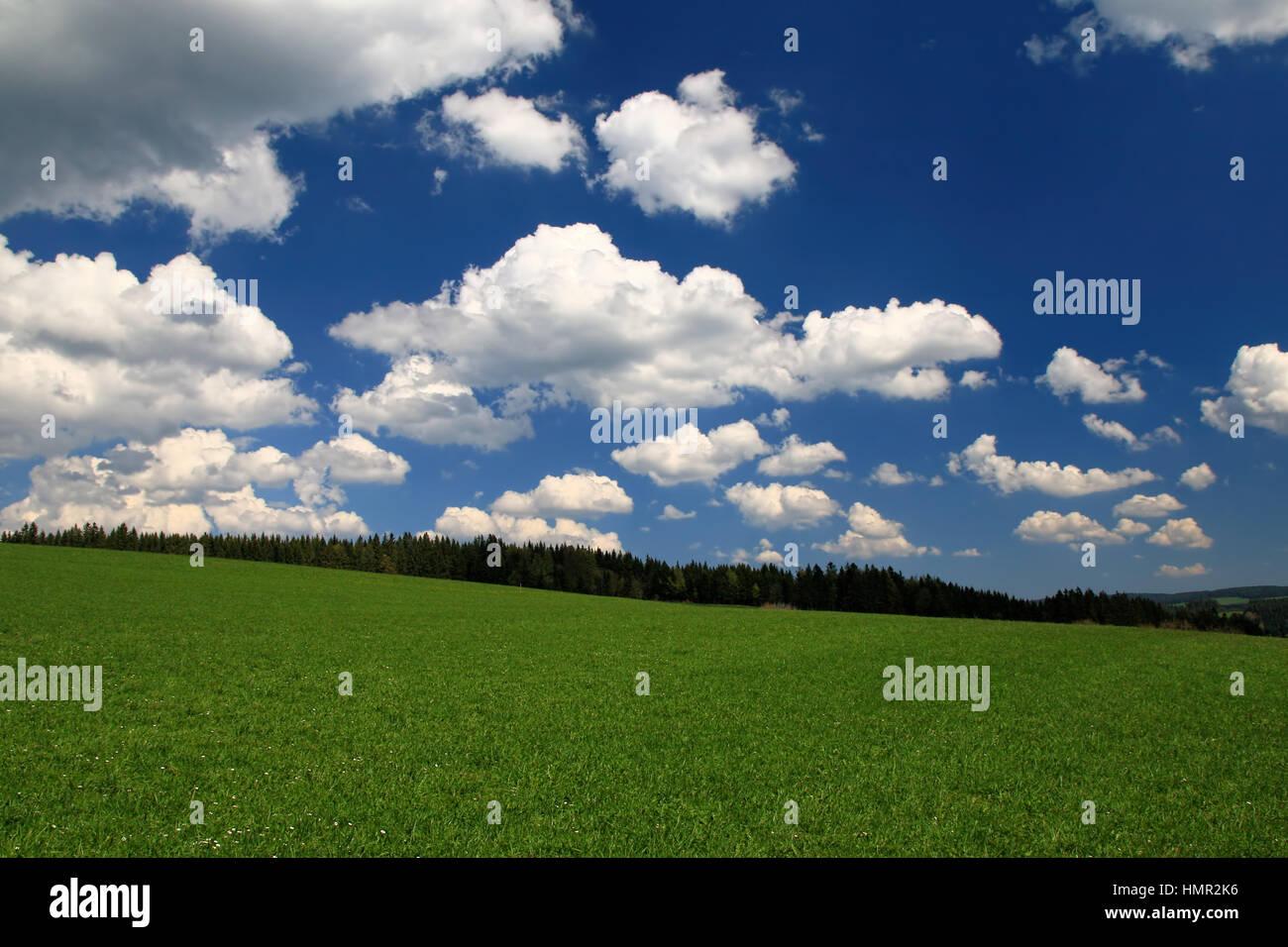 Schwarzwaldwanderung unter blauem Himmel - Stock Image
