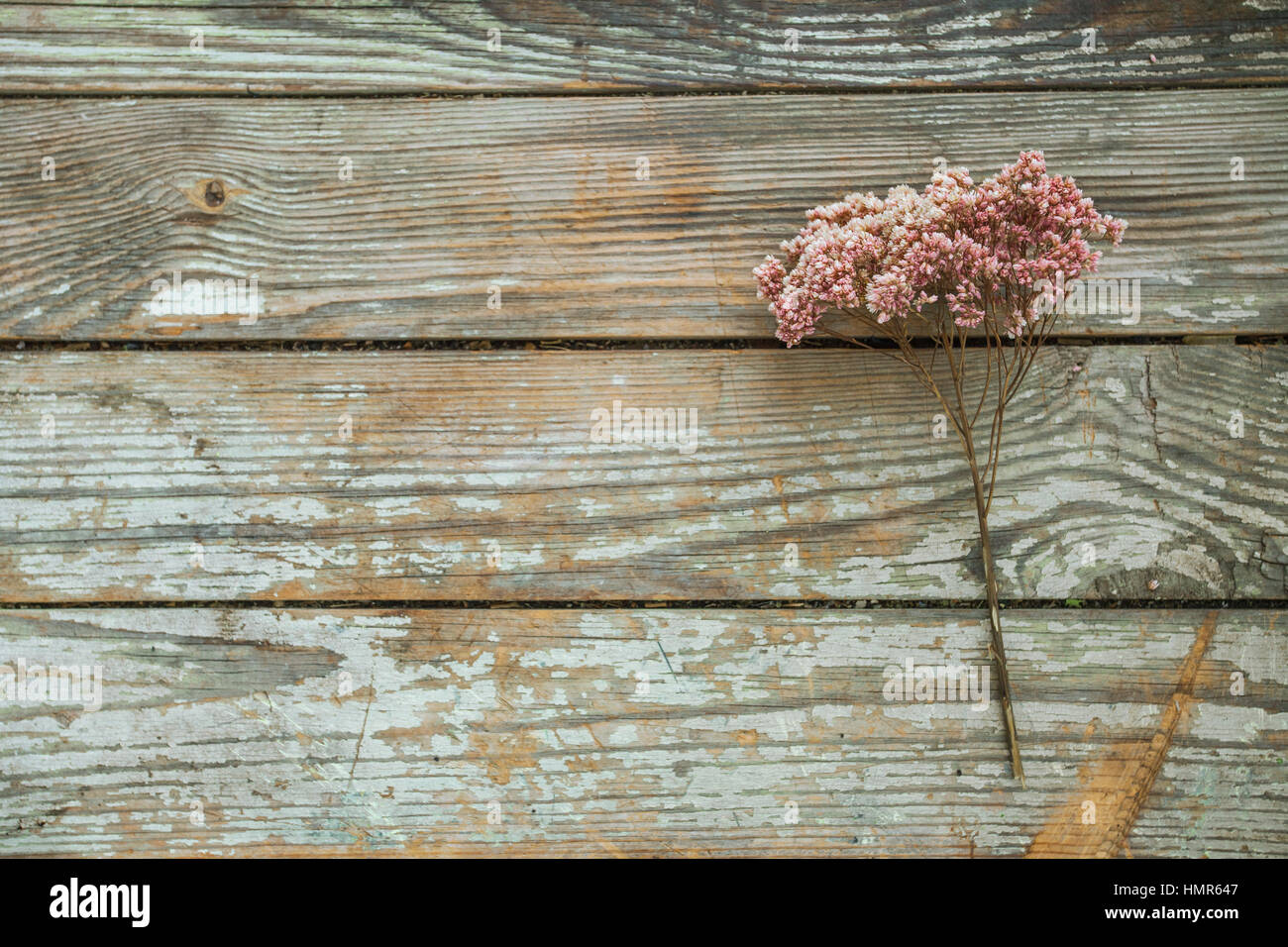 Dry flower heather on wooden background, simplicity, daylight, space around - Stock Image