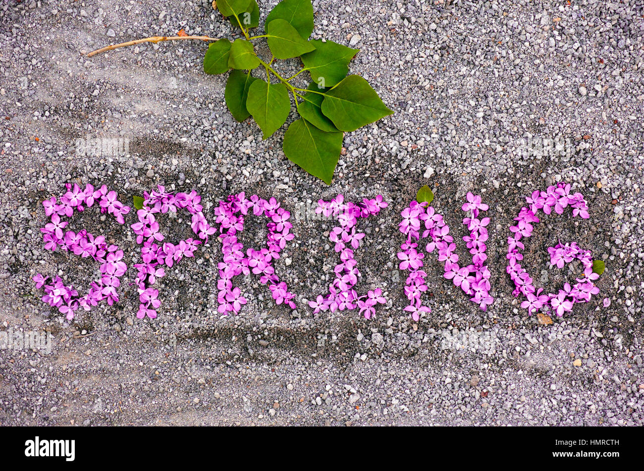Word Spring spell out from magenta lilac flowers on the ground - Stock Image