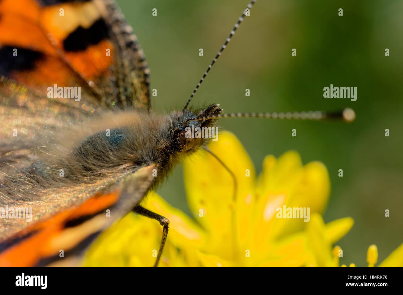 Insect Garden Macro - Stock Image