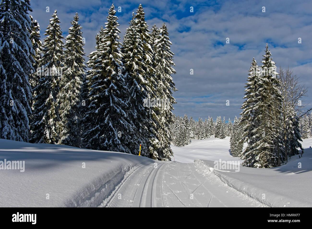 Cross-country skiing run of the Trans-Jura Swiss long-distance ski trail, Nordic skiing centre Saint-Cergue, Vaud, - Stock Image