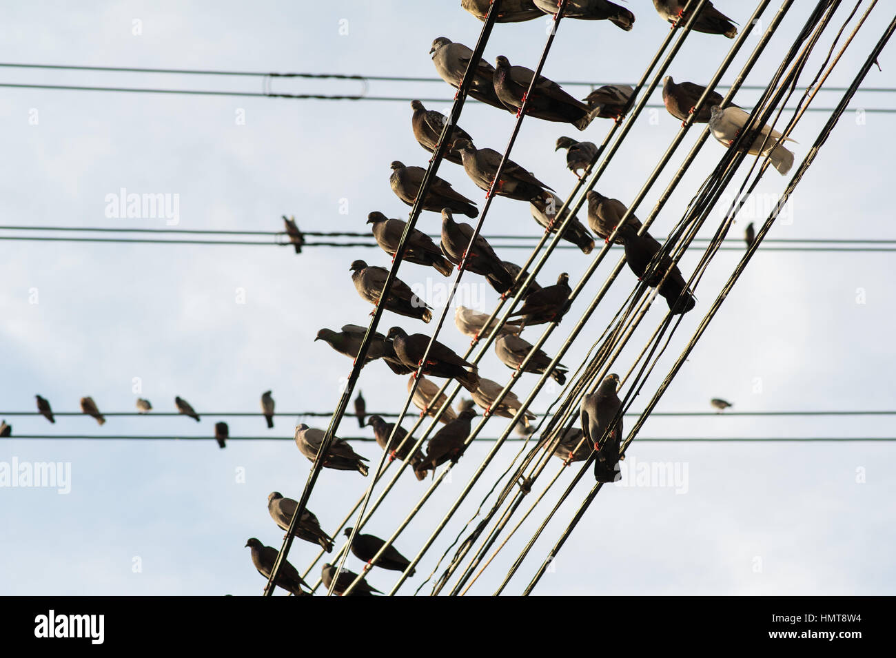 Electricity cables in Bangkok, Thailand - Stock Image