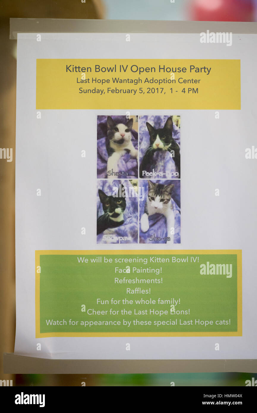 Wantagh, USA. 5th Feb, 2017. During Hallmark Channel's Kitten Bowl IV, Last Hope Animal Rescue has Open House - Stock Image