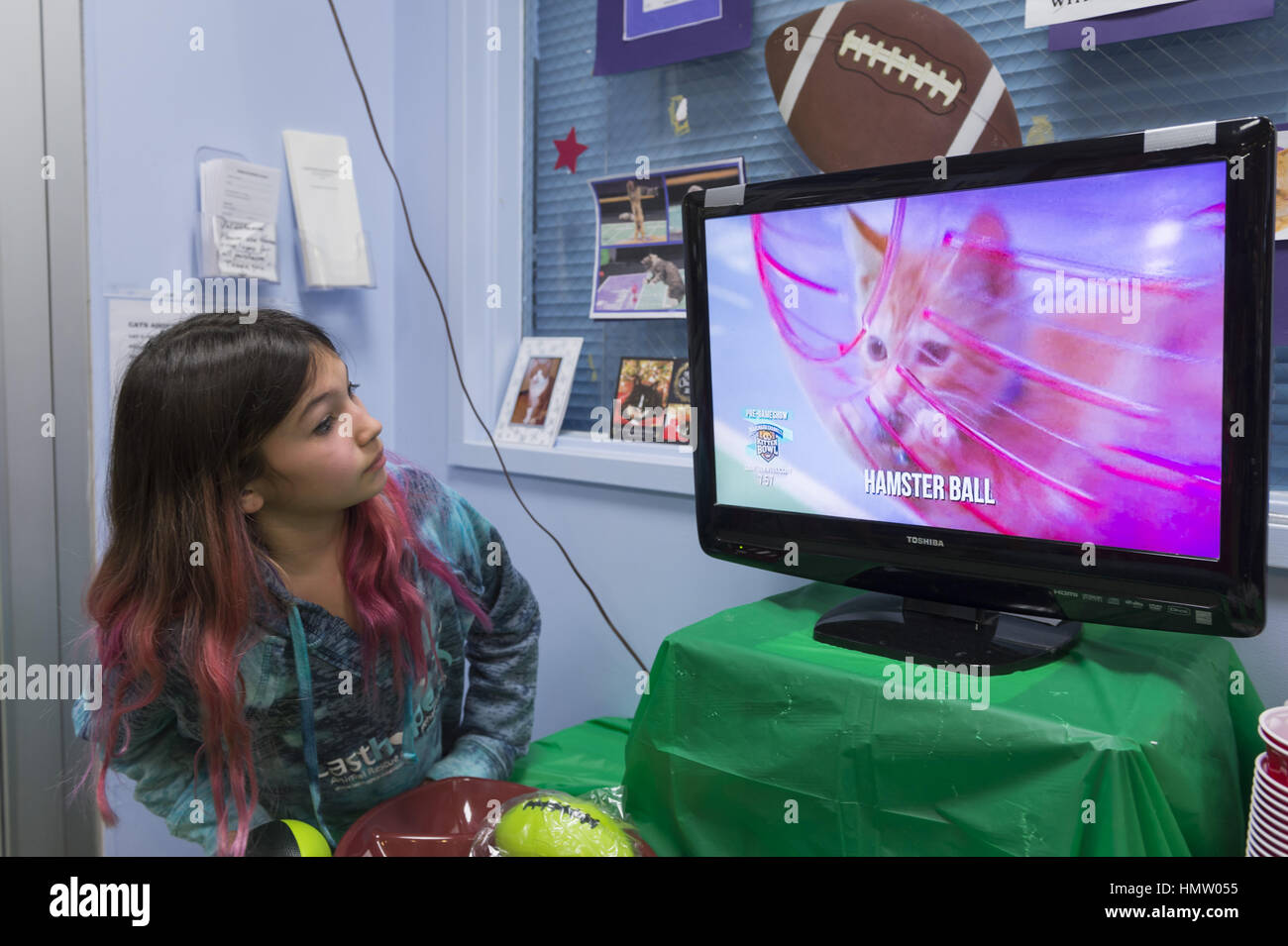 Wantagh, USA. 5th Feb, 2017. Suzanne Ferrara, 10, of Plainview, watches kitten playing in pink Hamster Ball on television - Stock Image