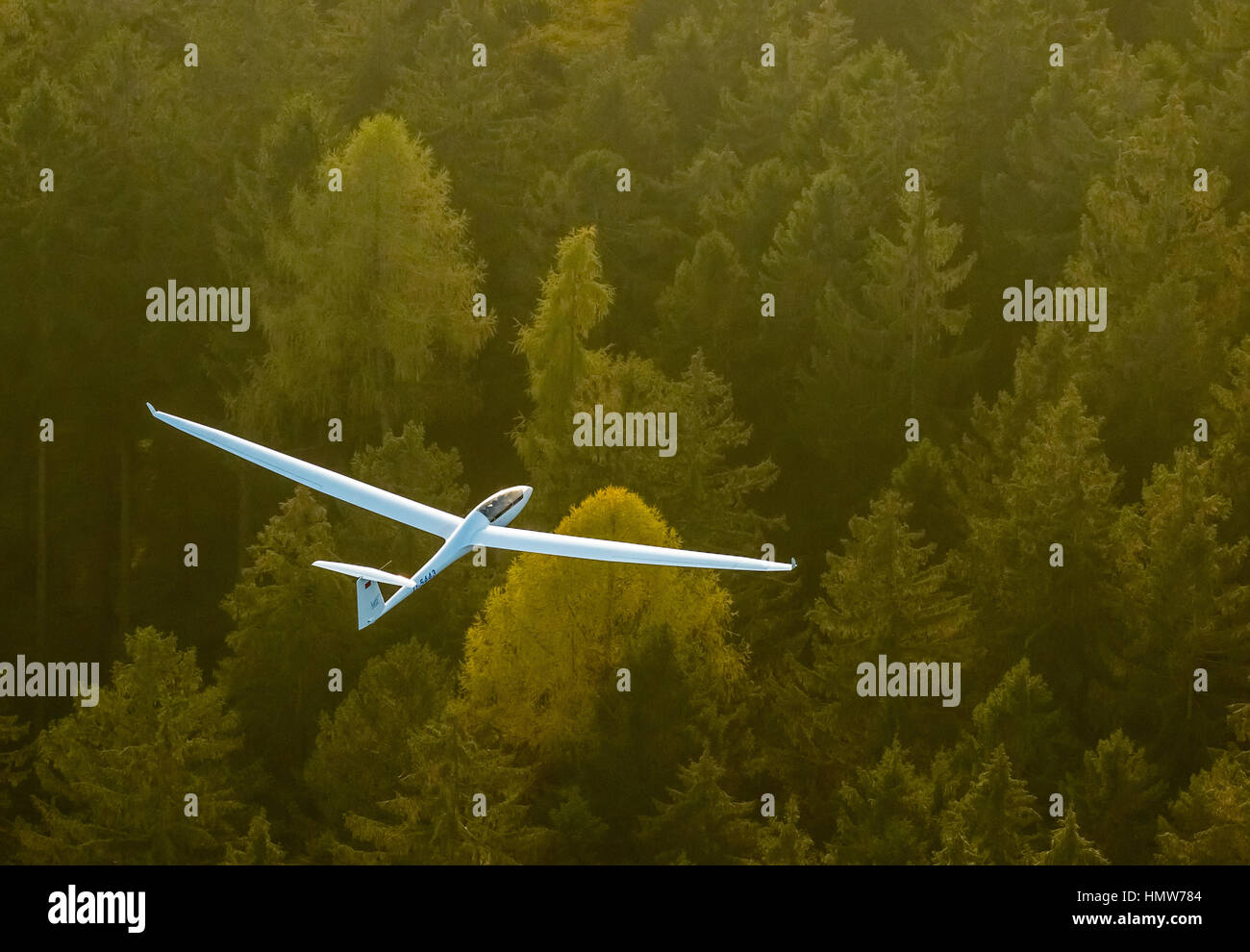 Glider, two-seater, Duo Discus D-5443 over autumn forest, near Arnsberg, Ruhr district, North Rhine-Westphalia, - Stock Image