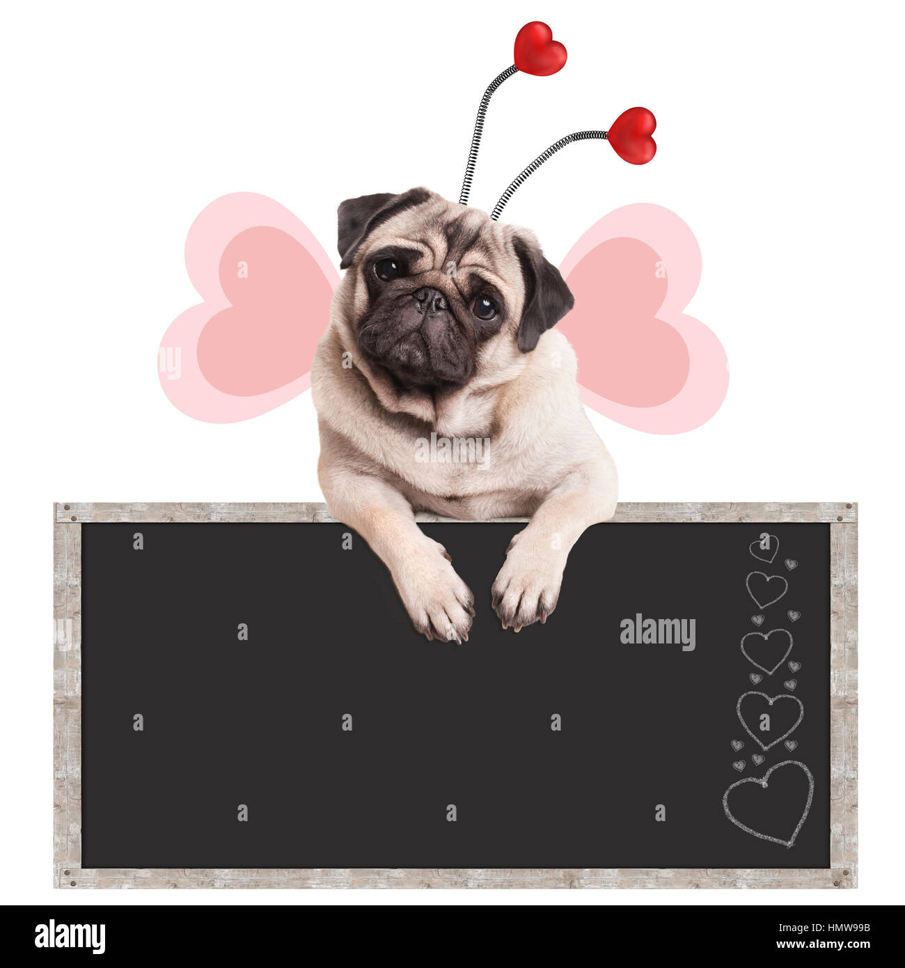 cute sweet pug puppy dog with diadem and butterfly wings leaning with paws on blackboard promotional sign, isolated Stock Photo