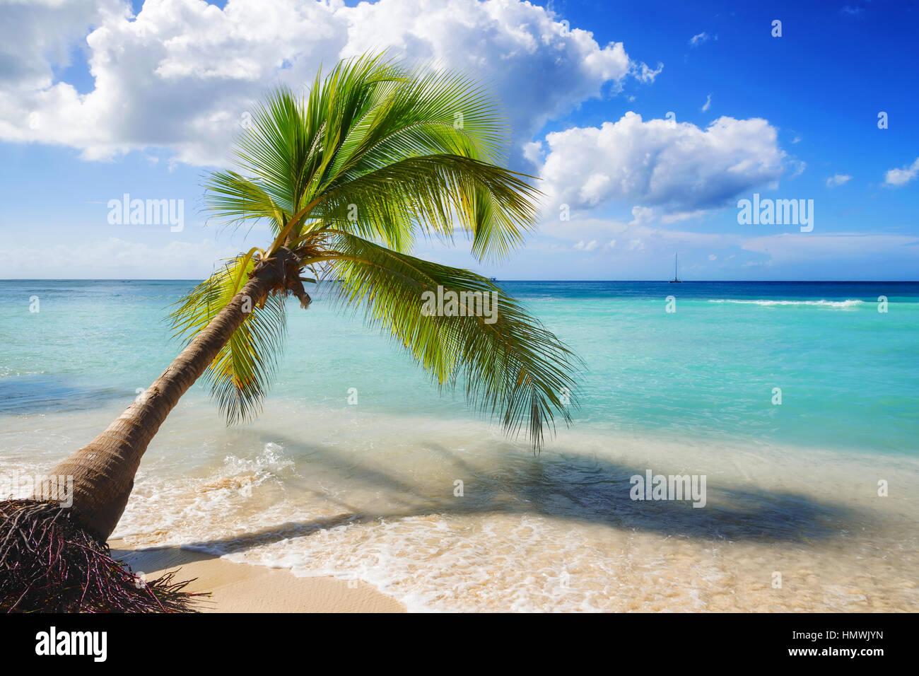 caribbean beach landscape - Stock Image