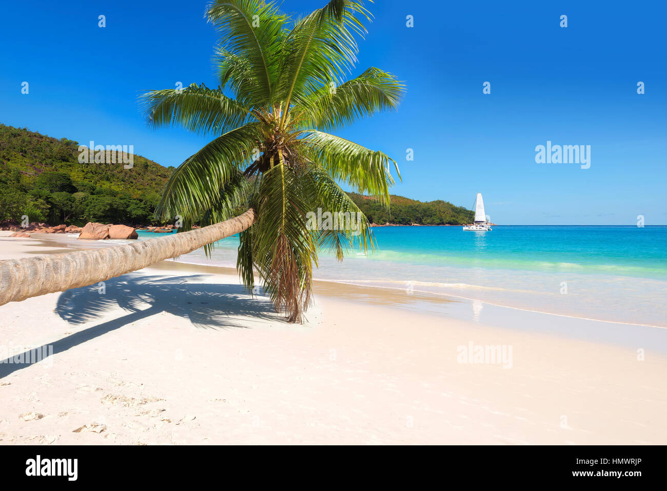 Palm tree on tropical beach. - Stock Image