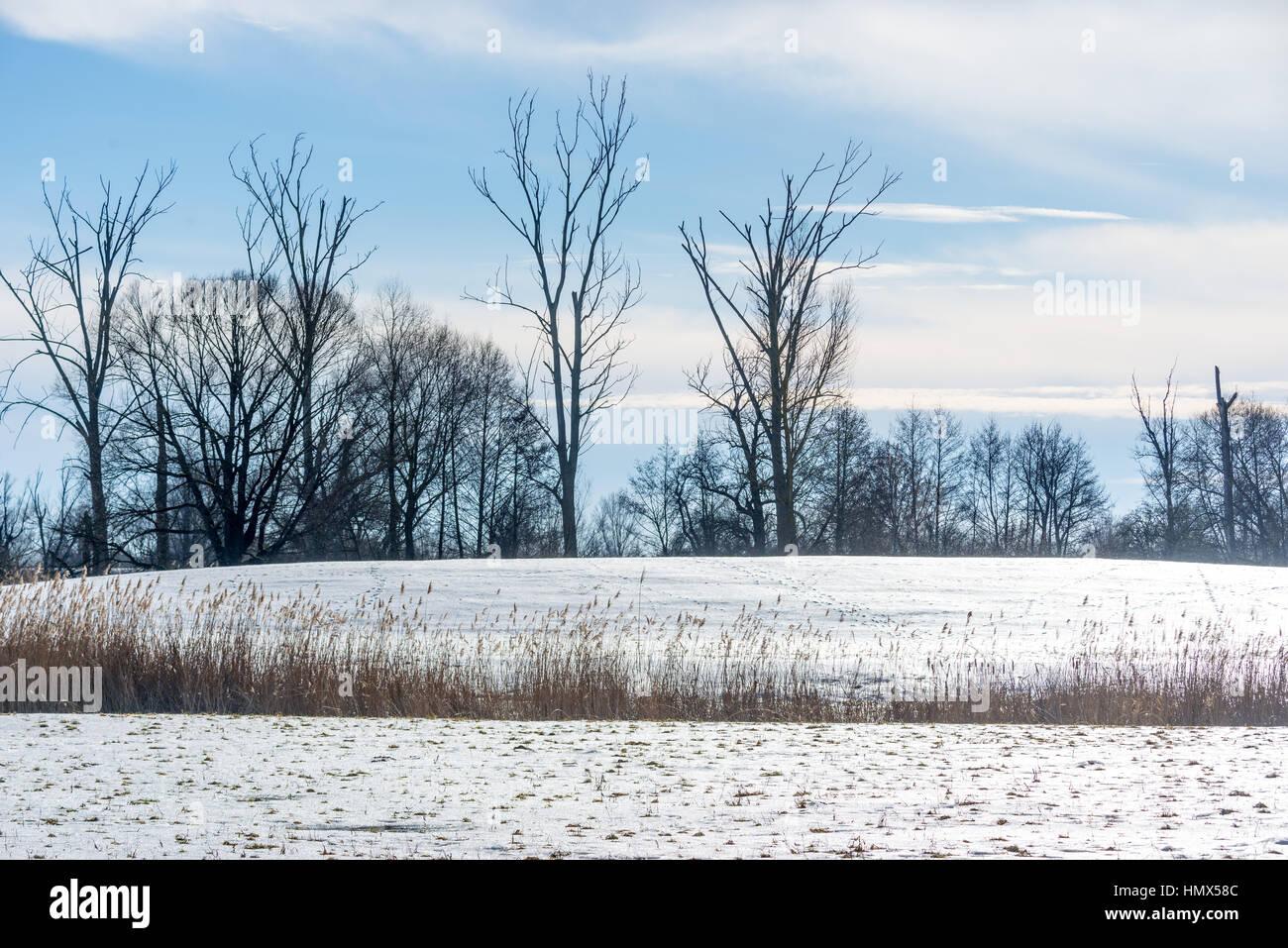 Winter Daube river Bavaria Scene - Stock Image