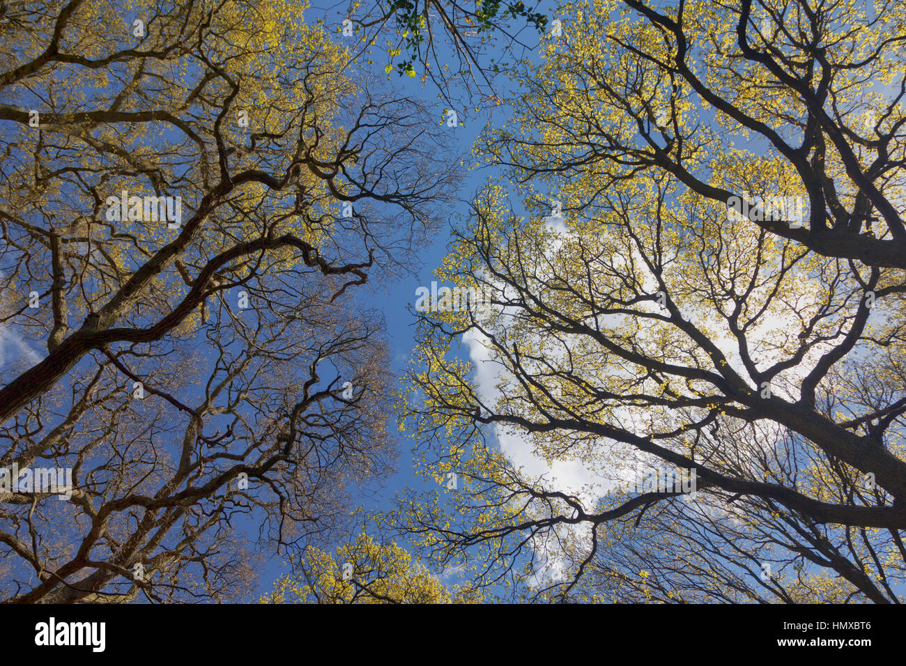 View of the sky from greenbelt, Totteridge London - Stock Image