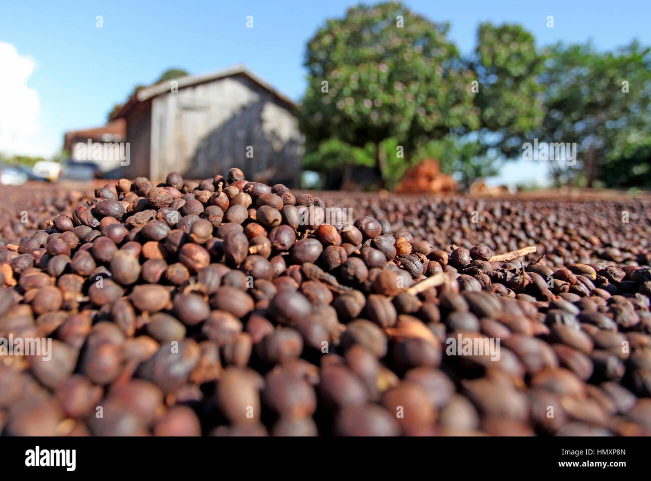 CAMPO MOURÃO, PR - 07.02.2017: RECURSOS PARA O SETOR CAFEEIRO - The Director of Strategic Planning Committee - Stock Image