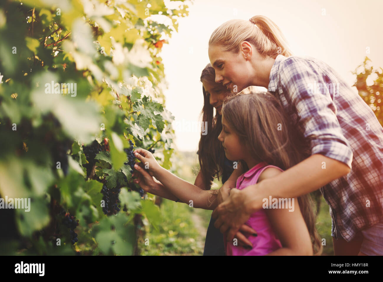 Winemaker family happy together in vineyard before harvesting - Stock Image