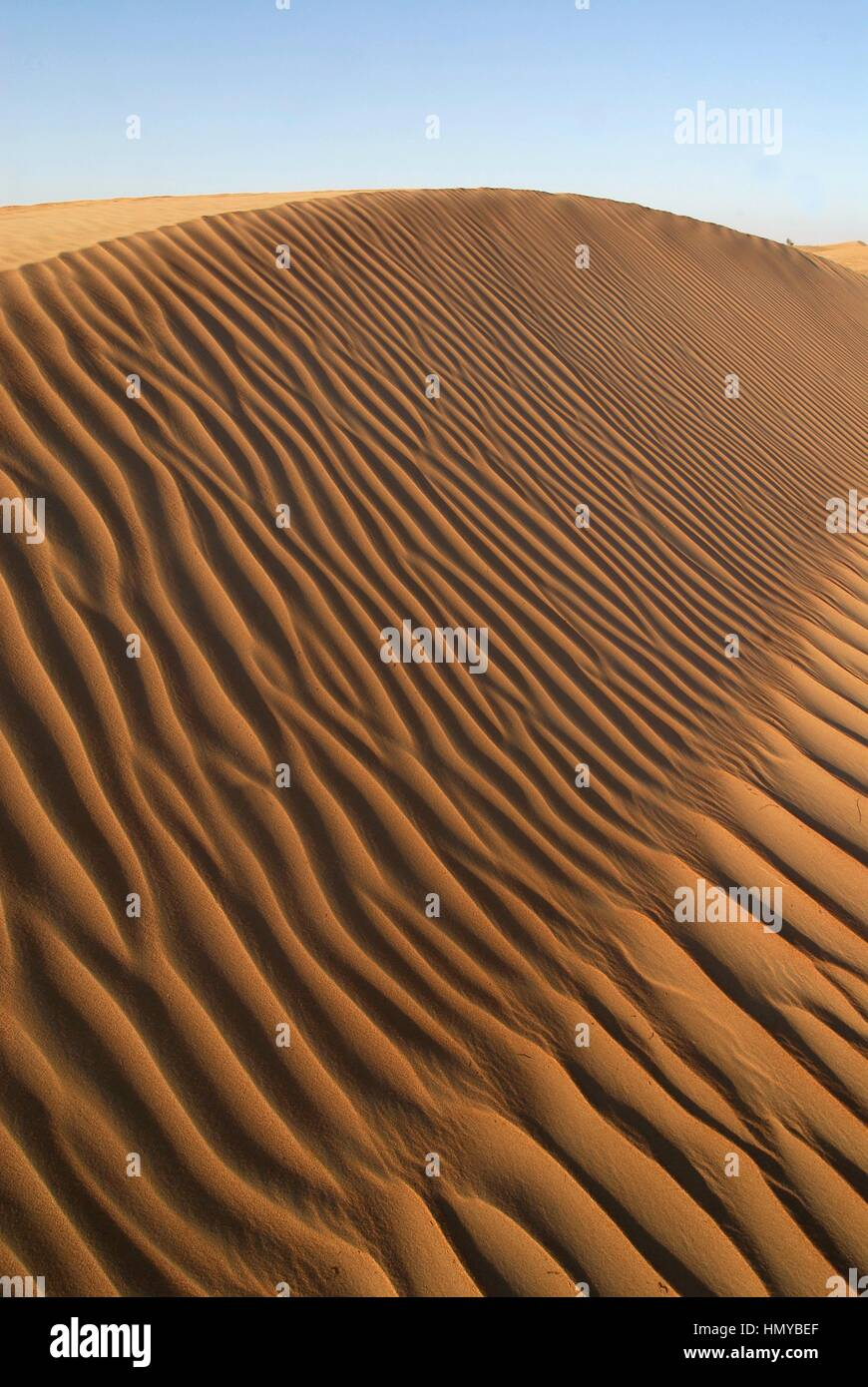 Dubai Conservation Desert Reserve in Mirdif. Dubai. United Arab Emirates. - Stock Image