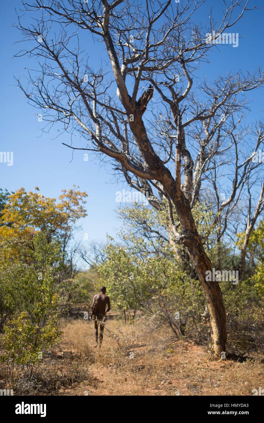 San Bushman hunting - Stock Image