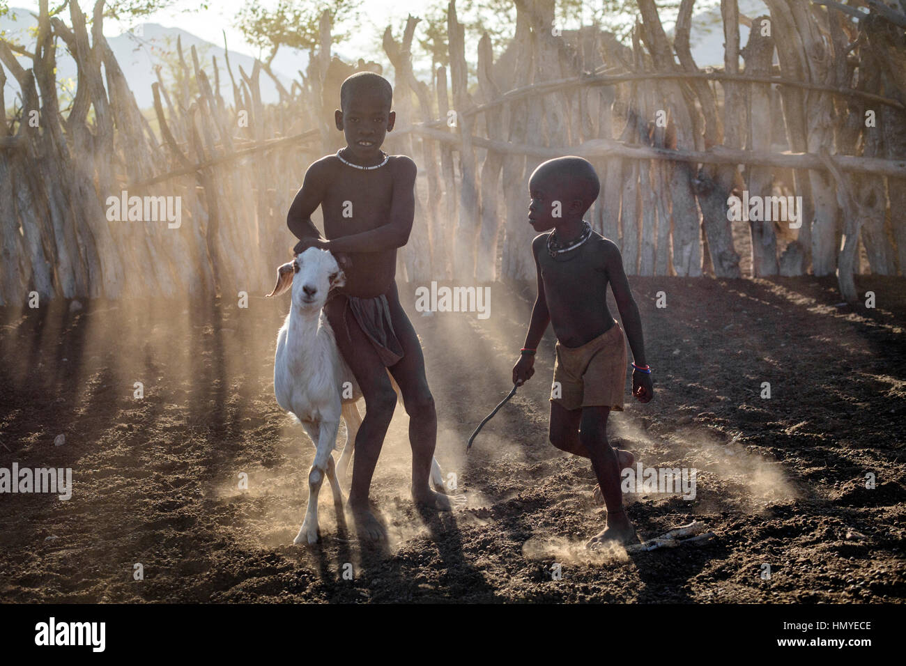 Himba boys rounding up a goat. - Stock Image
