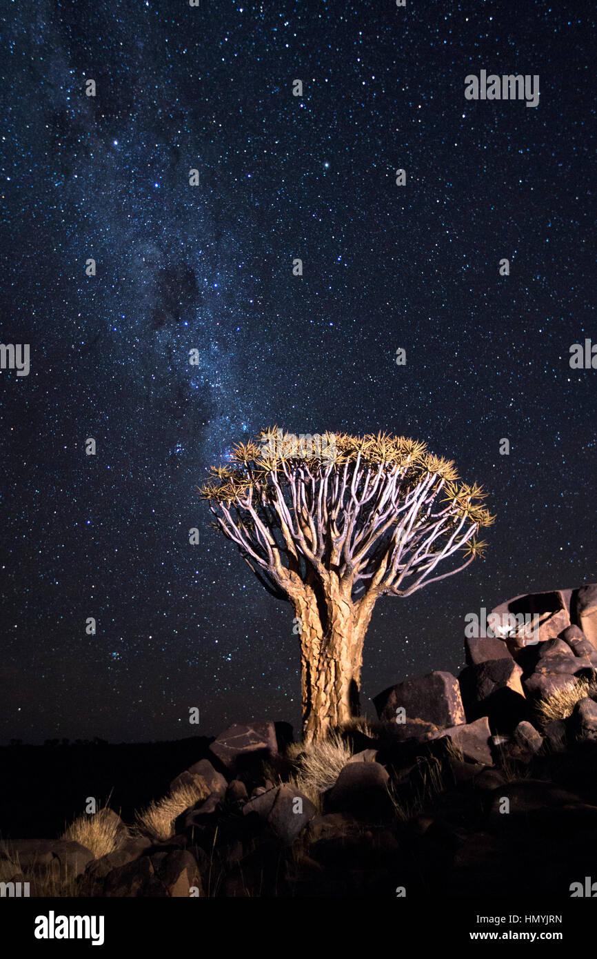 Tree under the Milky Way - Stock Image