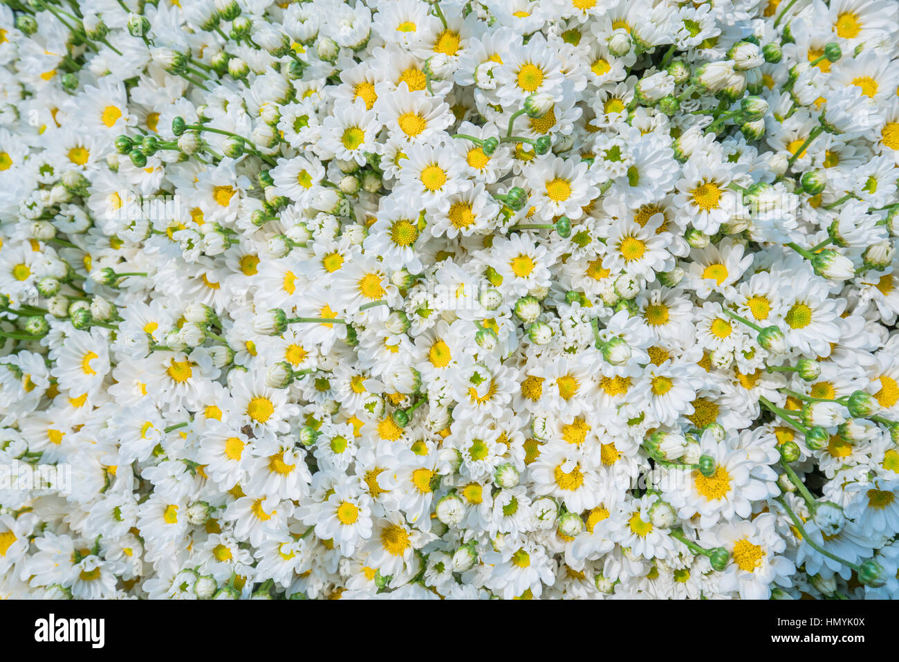 Colorful Flowers Background For Sale At The Wholesale Flower Market