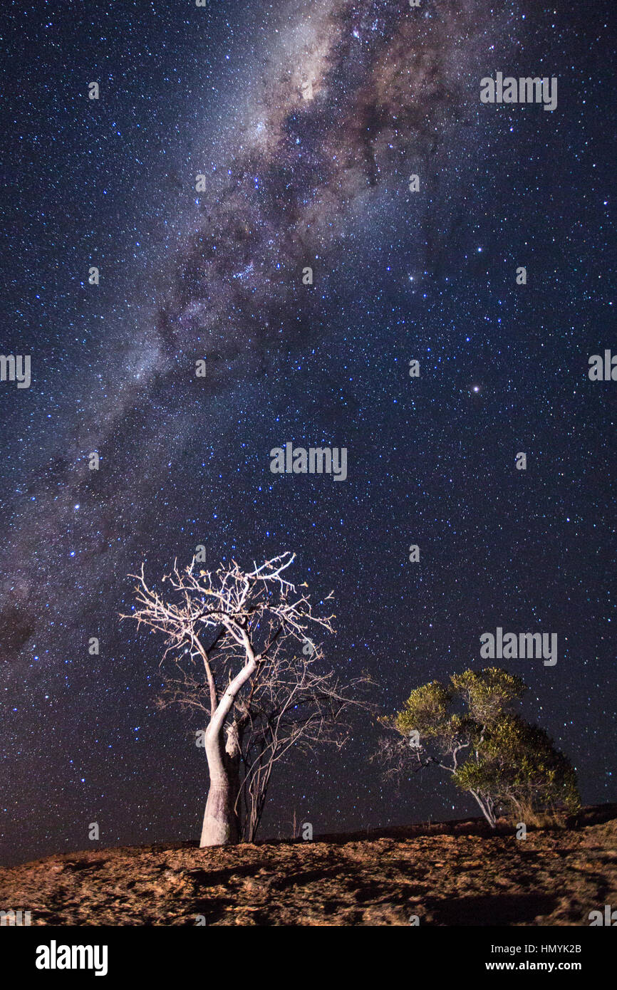 Tree under the Milky Way - Stock Image