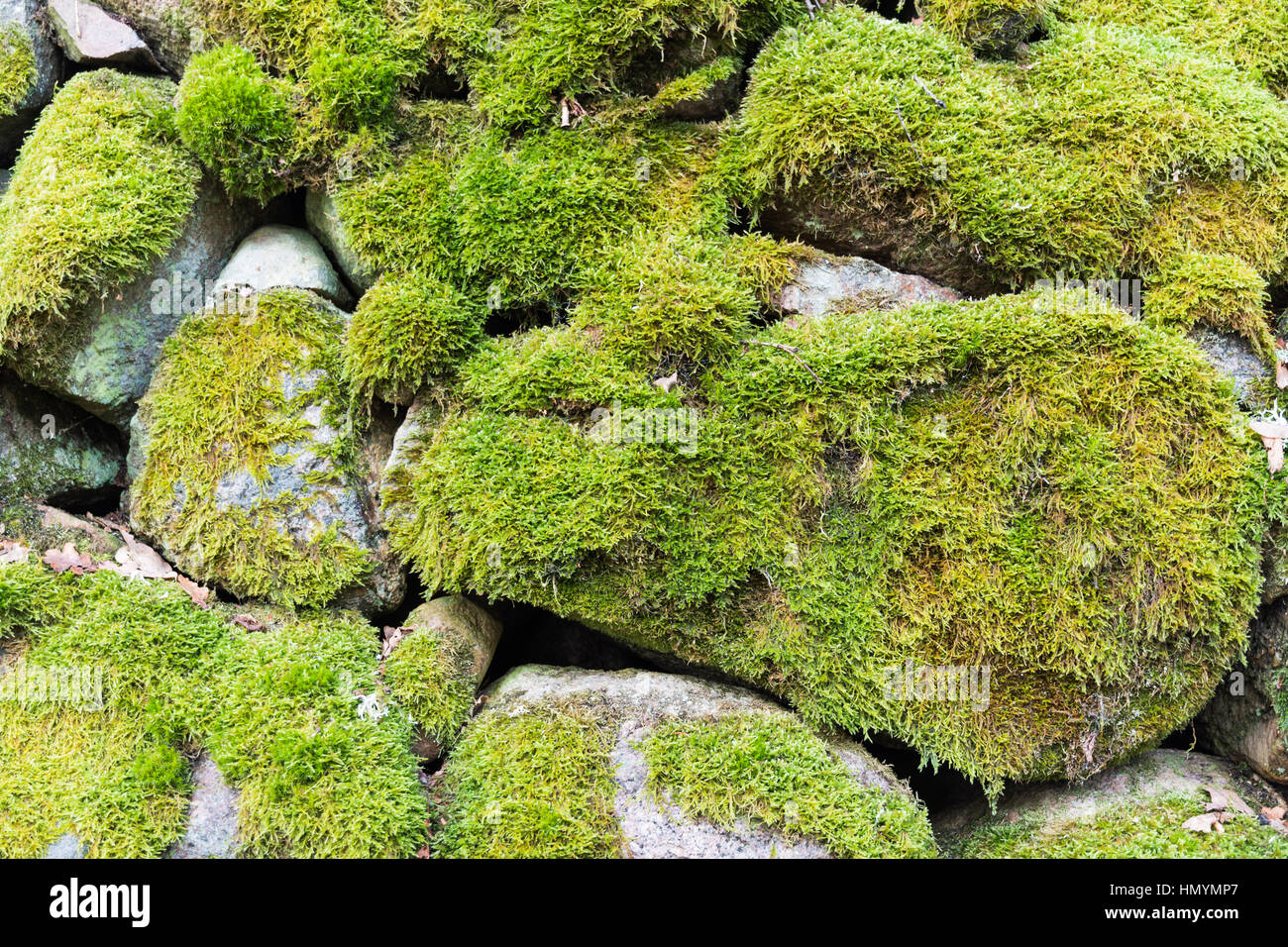 Detail of a moss-grown stone wall fence - Stock Image