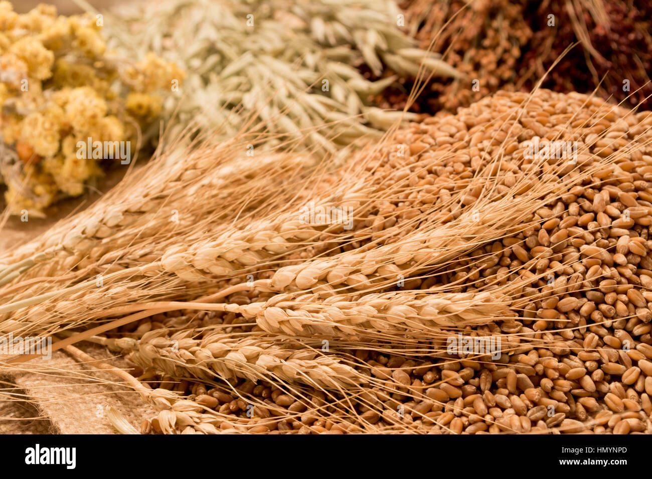 wheat, ears of corn and grasses - Stock Image