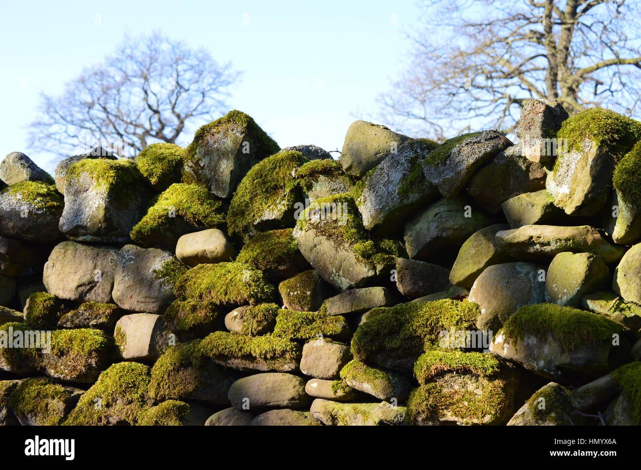 Mossy Dry Stone Wall in Wycoller, Lancashire - Stock Image