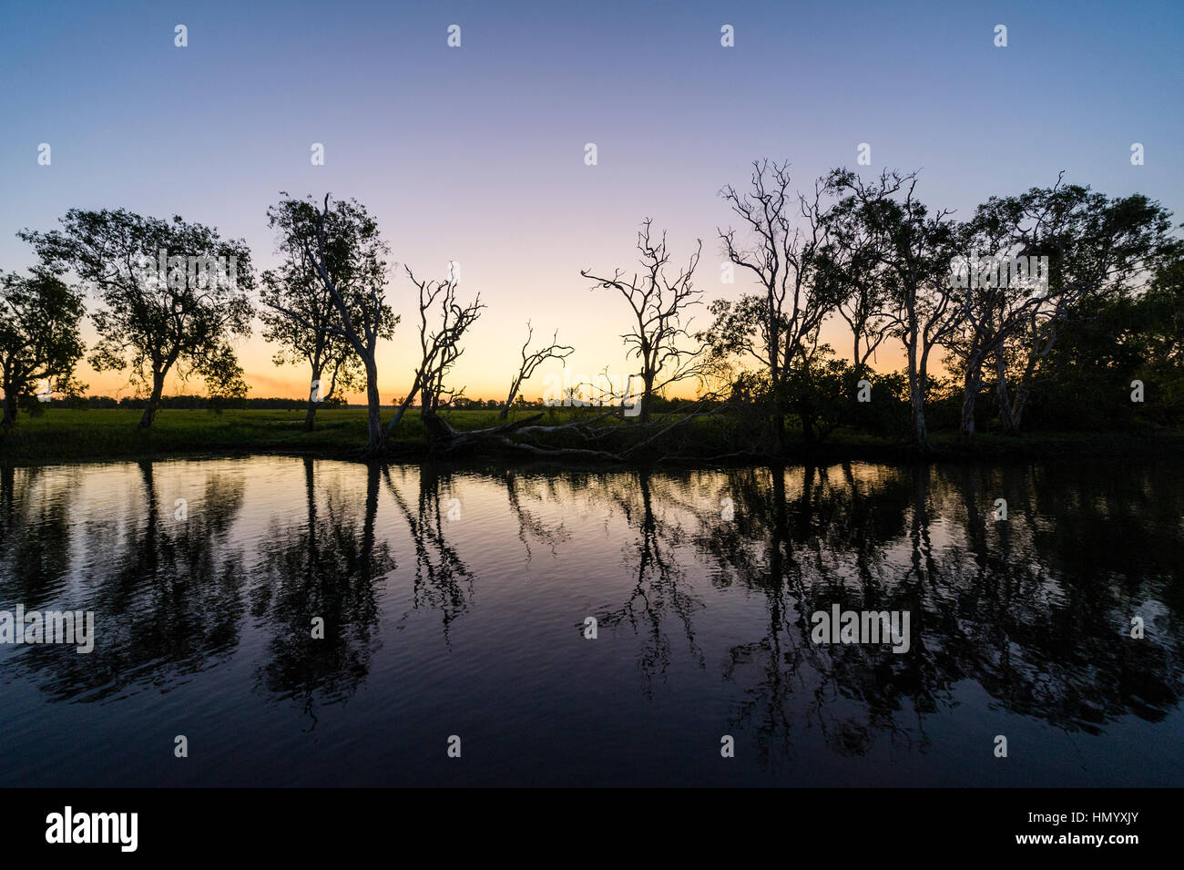 A tranquil row of trees along the shore of a wetland silhouette at sunset. - Stock Image