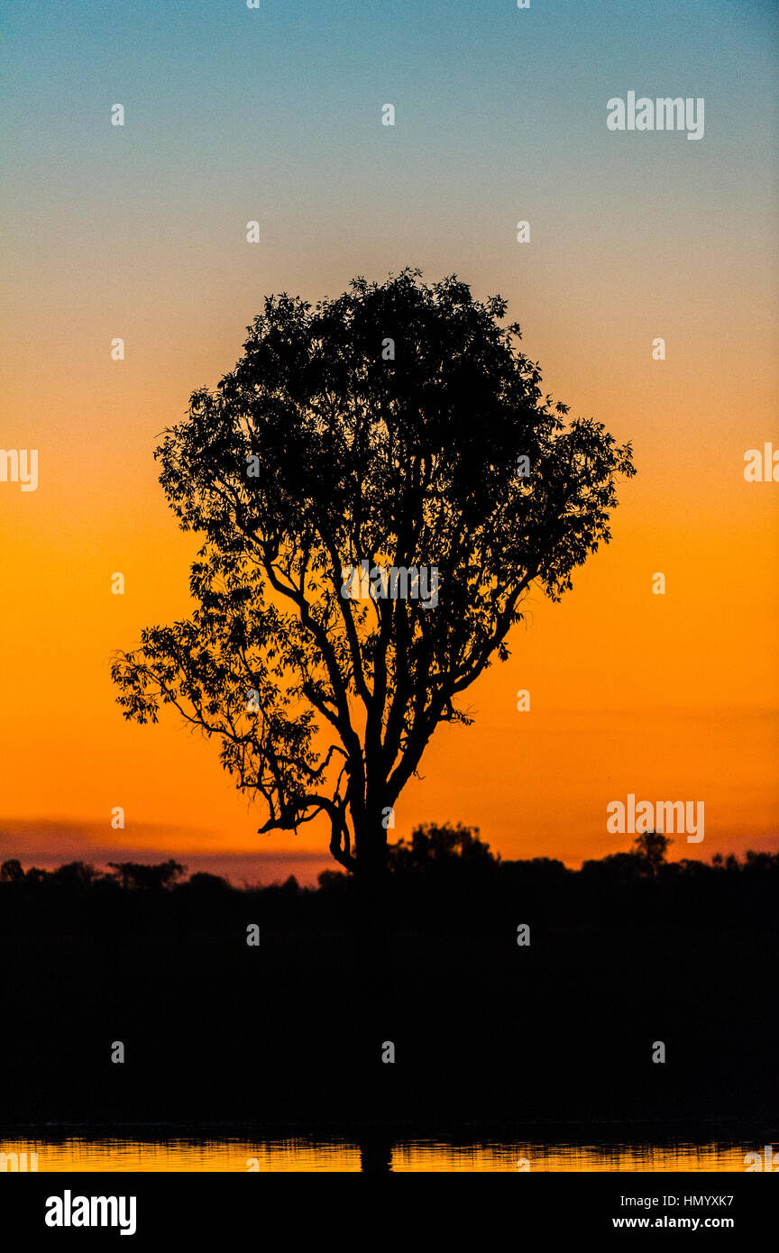 A tree on the shore of a wetland silhouette at sunset. Stock Photo