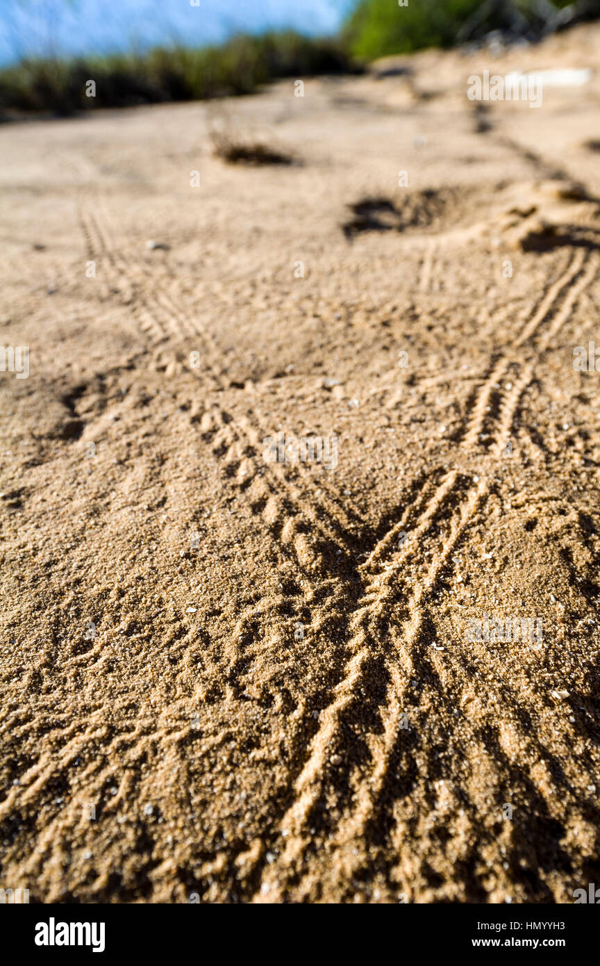 A highway crossroad of insect tracks on a coastal sand dune. - Stock Image
