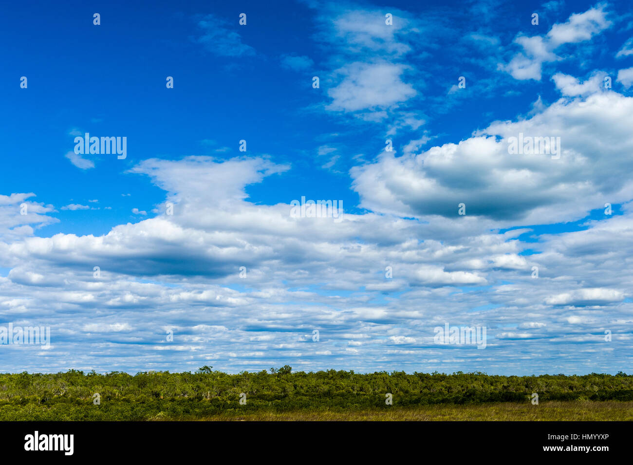 A cloud bank rolls inland from the coast over a mangrove forest. - Stock Image
