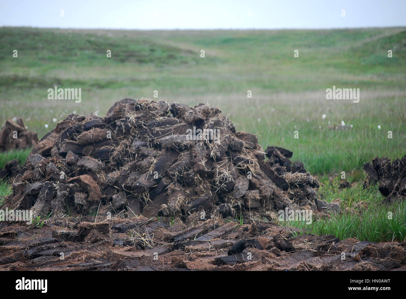 peat bog cutting - Stock Image
