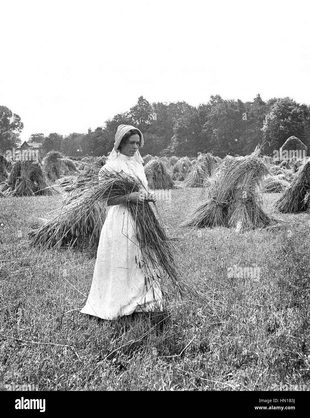 Edwardian period country farm girl making hay 1900s - Stock Image