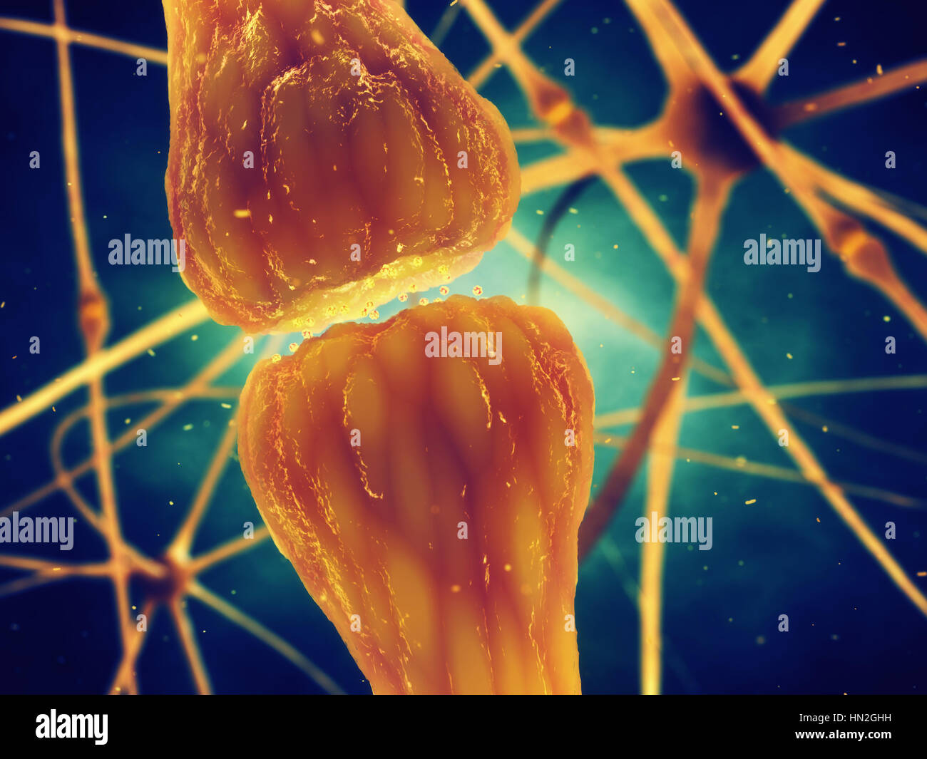 Synaptic transmission is the biological process by which neurotransmitters are released by a neuron and activate - Stock Image