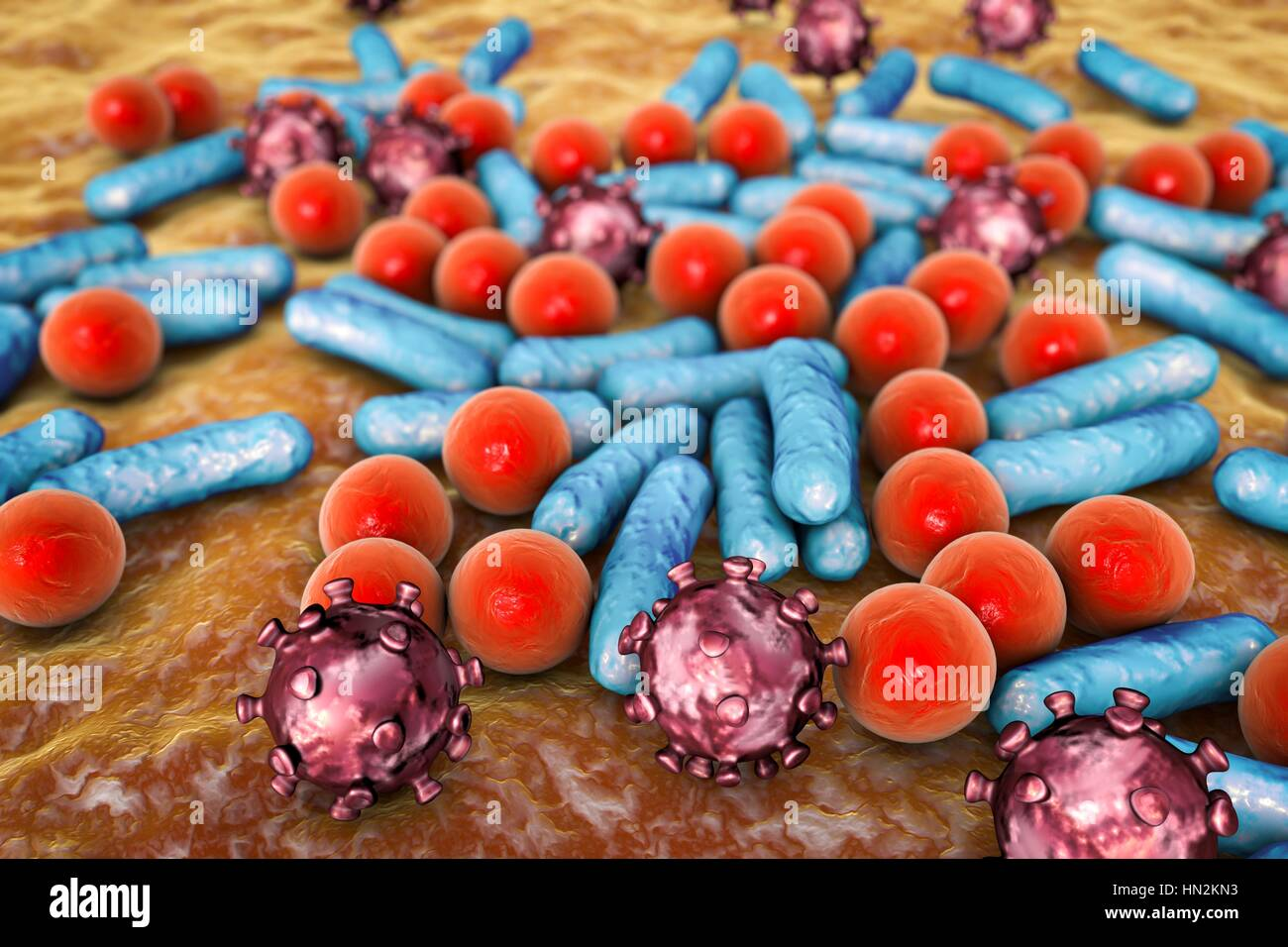 Various microbes of different shapes, computer illustration. Mixture of microorganisms including spherical (cocci) - Stock Image